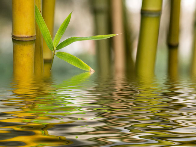 esprit-zen-jardins-9f8e00T650